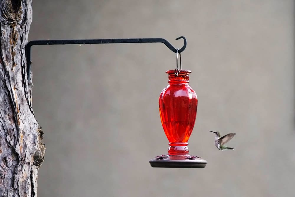 Hummingbird Nectar Artzy Foodie